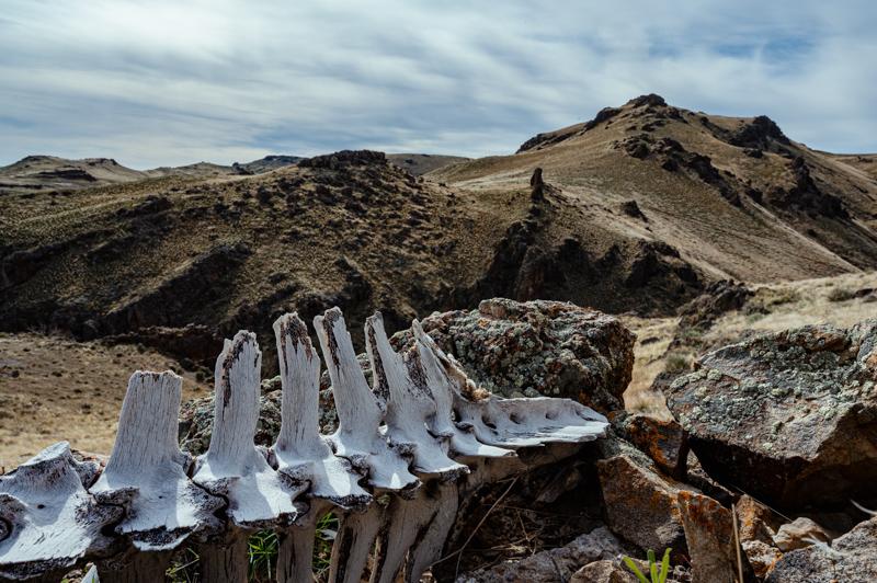 大きな恐竜の化石が横たわる荒野